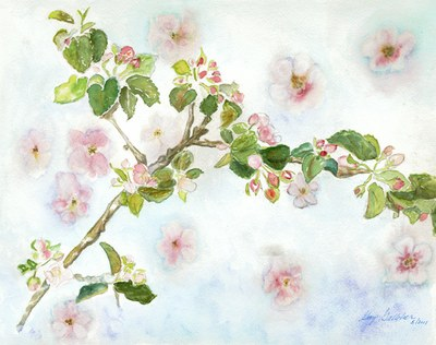 Its apple blossom time copy