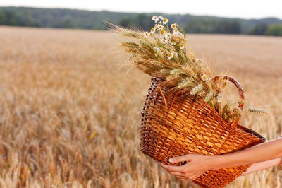 wheat field with basket
