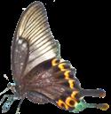 butterfly left 125x129