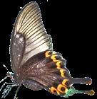 butterfly left 136x140