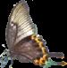 butterfly left 75x77
